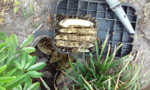 bee_removal_from_water_valve