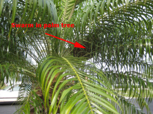 bees_in_palm_tree