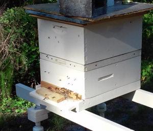 bees_in_water_meter_5_31_2016_in_apiary